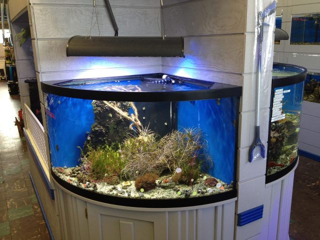 Fish aquariums near me parrot cichlids aqueon 65 gallon for Aquariums for sale near me